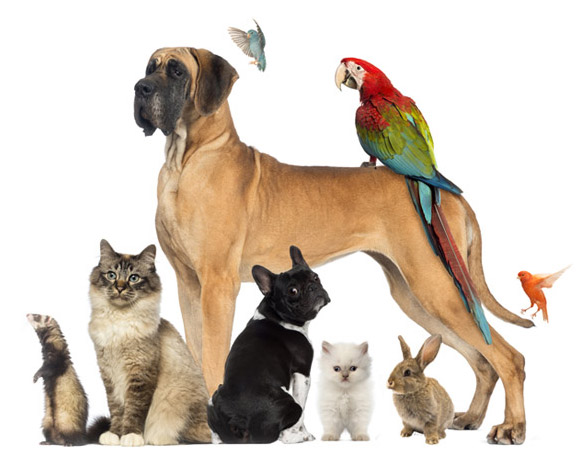 Natural Best Products for Pets